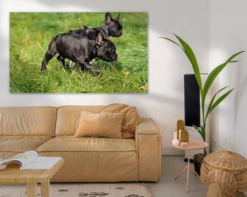 Französische Bulldogge 9 van Heike Hultsch