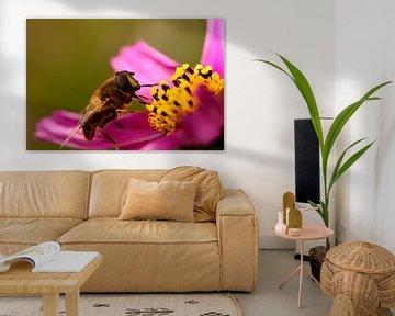 Eine Schwebefliege auf einer Blume von Gerard de Zwaan