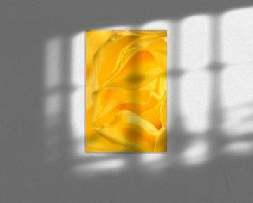 Detail gele roos staand