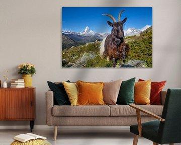 Berggeit bij de Matterhorn van Menno Boermans
