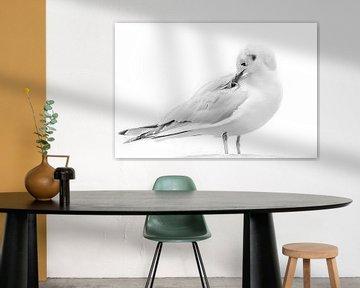 Lachmöwe sitzt mit dem Schnabel in den Federn von Fotografie Jeronimo