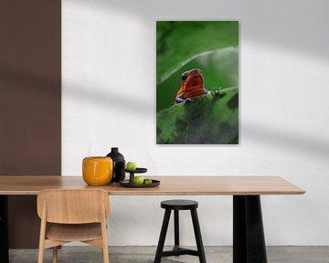 Little strawberry frog van Desirée Couwenberg