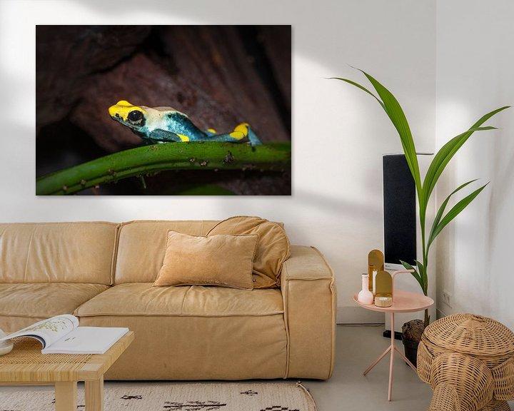 Sfeerimpressie: pijlgifkikker liggend op een blad van Desirée Couwenberg