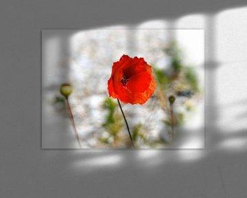 In Rot von Eduard Lamping