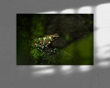 Groen met bruine pijlgifkikker van Desirée Couwenberg