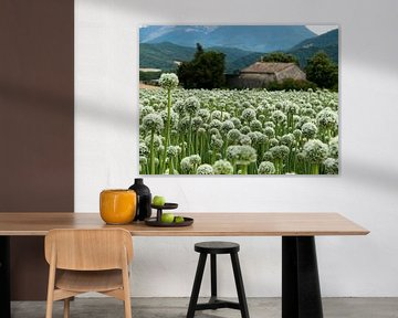 Zaadbloemen van uienbollen sur M  van den Hoven