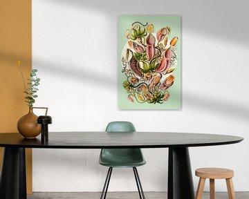 The Carnivorous Plants von Marja van den Hurk