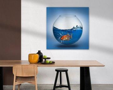 Der Goldfisch im Glas von Ursula Di Chito