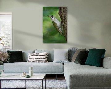 Green Woodpecker ( Picus viridis ), perched on a tree trunk, turning back its head, van wunderbare Erde