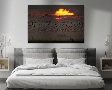Aufbruch zum Sonnenaufgang... Gänse *Darß-Zingst* sur wunderbare Erde