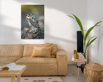 Southern White-faced Owl (Ptilopsis granti) van wunderbare Erde