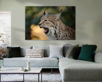 Eurasian Lynx (Lynx lynx), close-up, headshot van wunderbare Erde