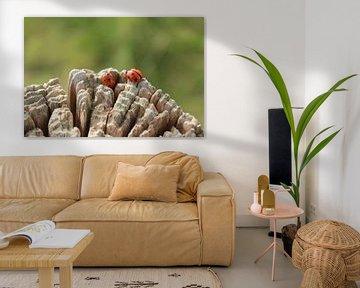 Lieveheersbeestjes van Jolande Monique Honig