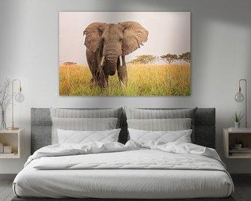 Olifant in de savanne in Oeganda