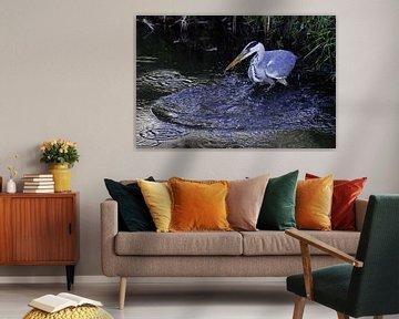 Reiger vangt een vis van Alice Berkien-van Mil
