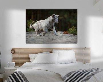 Königstiger *Panthera tigris* in schnellem Lauf von wunderbare Erde