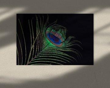 Pauwenveer in het donker van Celina Dorrestein
