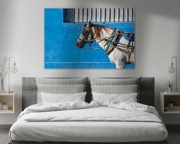 Paard in Trinidad sur Celina Dorrestein