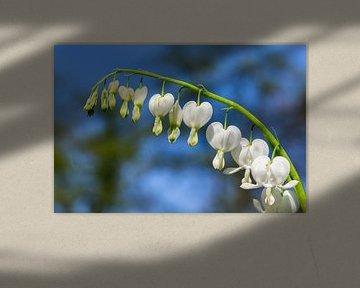 Blühende gebrochene Herzen von Blumen mit blauem Himmel von Ben Schonewille