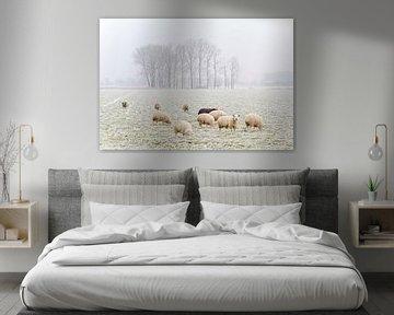 Winter Sheeps von Steven De Baere