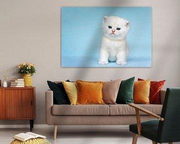 Kitten zit op blauwe achtergrond van Ben Schonewille