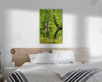 Kromme boomstammen bij bosbeek in voorjaar van Ben Schonewille