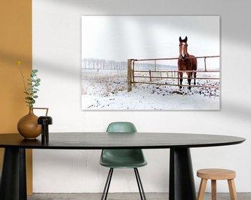 Winter Horse van Steven De Baere
