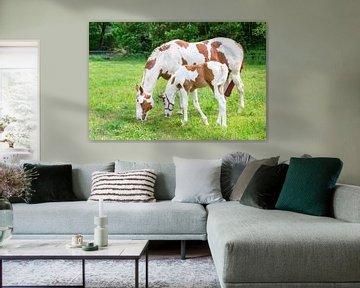 Neugeborenes bunte Fohlen mit Pferd in der Wiese von Ben Schonewille