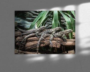 Drei Eidechsen auf einem alten Baum von Melvin Fotografie