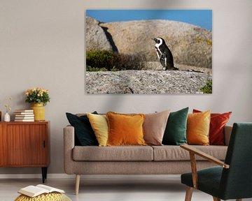 Pinguïn van Wilco Speksnijder