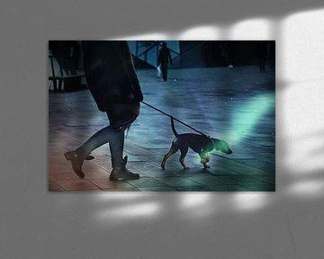 Stad van de honden von Stijn Dings