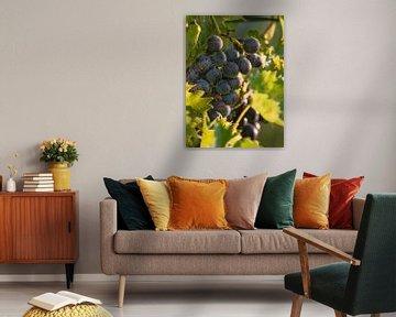 Een spinnenweb hangt aan rode druiven aan een wijnstok van Edith Albuschat