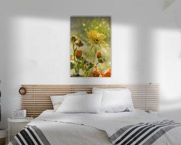 Sommerblumen im Sonnenschein an einem Morgen im Sommer von Edith Albuschat