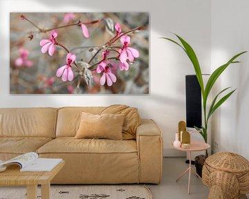 Ambiente Rosé von Katarina Niksic