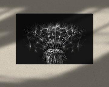 Löwenzahn in schwarz und weiß von Elianne van Turennout