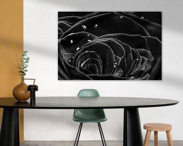 Die schwarze Rose von Elianne van Turennout