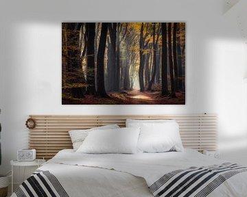 Herfst in het Speulderbos von Edwin Mooijaart