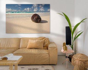 Kokosnuss am Paradies Strand von Jiri Viehmann