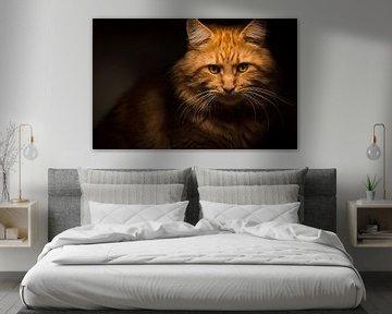 Rote Maine Coon Katze von Mathieu van den Berk