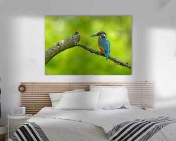 IJsvogel in de schaduw van Remco Van Daalen
