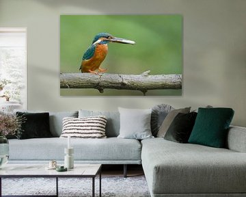 IJsvogel met grote vis van Remco Van Daalen