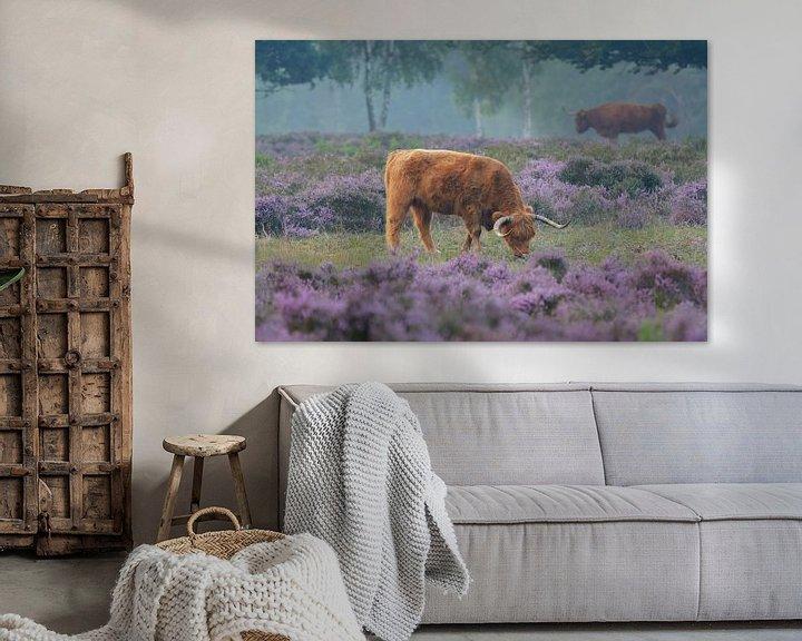 Sfeerimpressie: Schotse Hooglander in bloeiende paarse heide van Remco Van Daalen