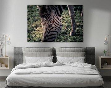 Zebra close up van Kim Bellen