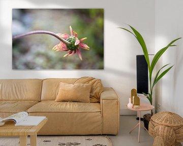 Mattierte Echinacea