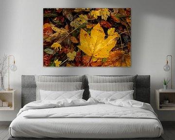 Colourful leaves van Stefan Heesch