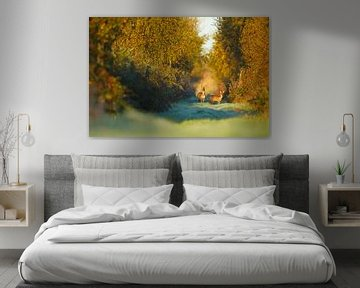 Reeën in een herfstachtig decor van Mark van der Walle