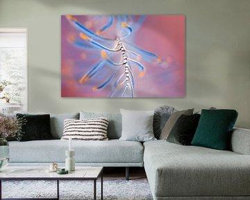 abstracte veer van Dray van Beeck