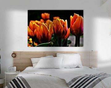 Oranje Tulpen von José Batterink