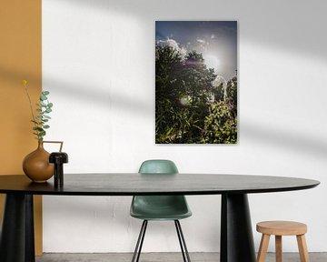 Purpurrosa Blüten bei Sonnenuntergang von Lisanne Koopmans