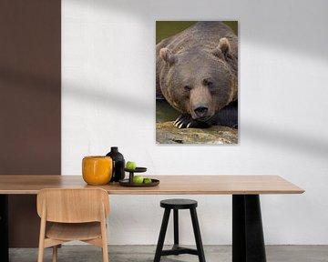 Portret van een Bruine beer in het Bayerischer Wald.